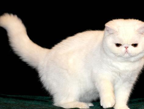 加菲猫感冒了怎么办?它感冒的症状是什么?